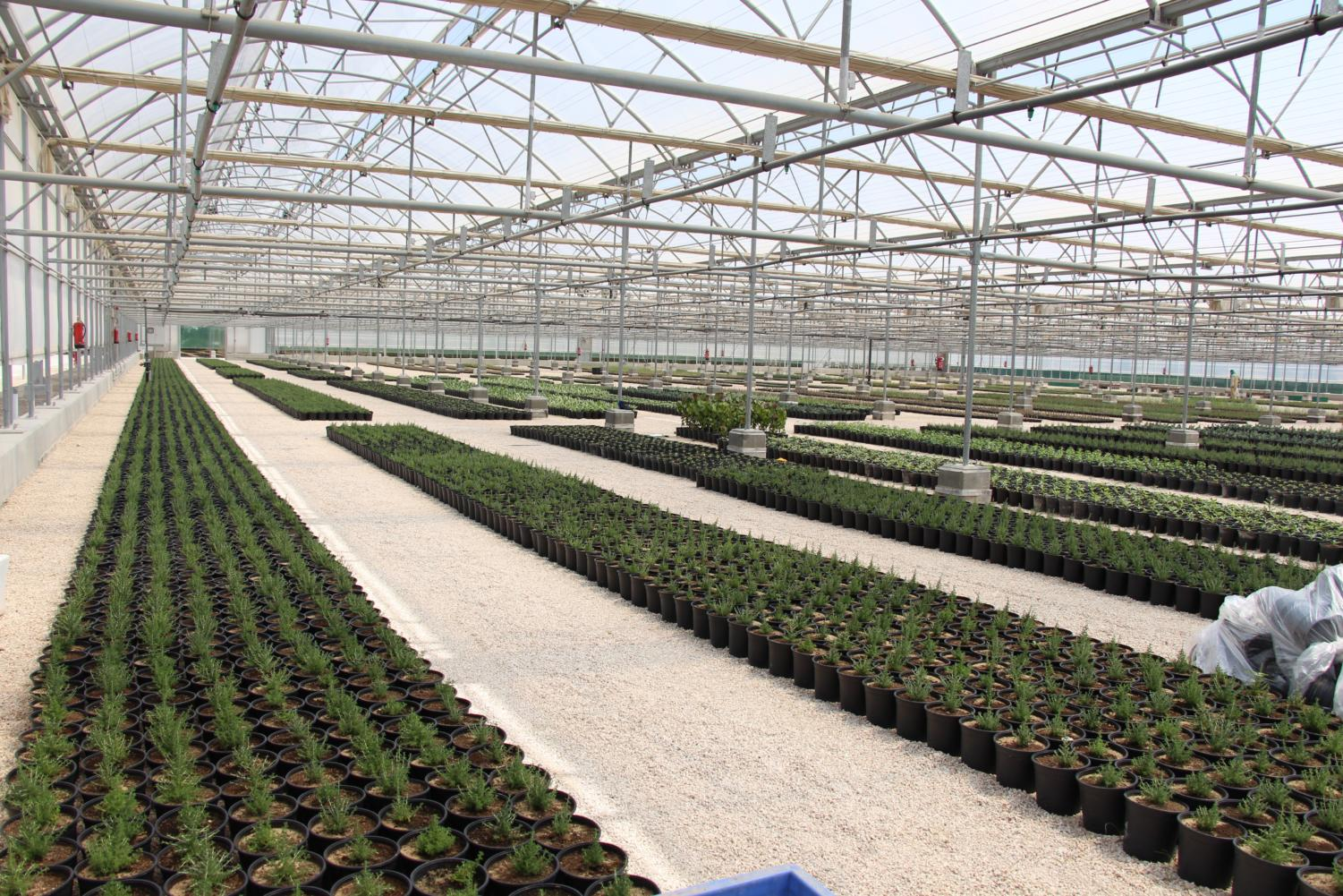 Plants+are+moved+from+their+natural+habitat+to+greenhouses+for+further+research+on+how+to+preserve+and+regrow+them.%0A